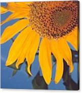 Sunflower In The Corner Canvas Print