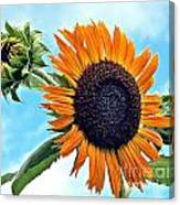 Sunflower In The Sky Canvas Print