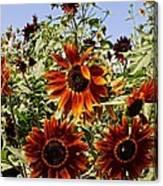 Sunflower Layers Canvas Print