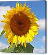 Sunflower Nirvana 30 Canvas Print
