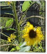 Sunflower Outline 4 Canvas Print