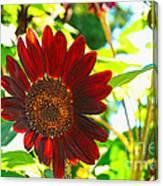 Sunflower - Red Blazer - Luther Fine  Art Canvas Print