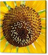 Sunflower Reproductive Center Canvas Print