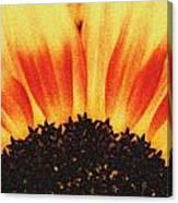Sunflower Rise Canvas Print