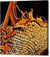 Sunflower Seeds In Oils Canvas Print
