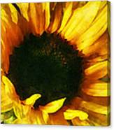 Sunflower Shadow And Light Canvas Print