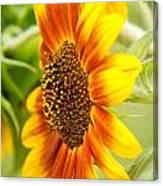 Sunflower Side Portrait Canvas Print