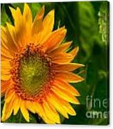 Sunflower Single Canvas Print