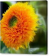 Sunflower Soft Canvas Print
