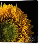 Sunflower Square Canvas Print