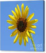 Sunflower Square Canvas Print