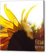 Sunflower Sunlight Canvas Print