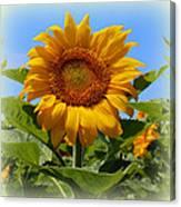 Sunflower Sunshine Canvas Print
