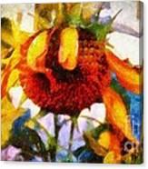 Sunflower Tender Canvas Print