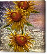Sunflower Trio Canvas Print