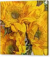 Sunflower Trio Canvas Print