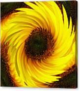 Sunflower Twirl Canvas Print
