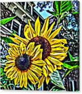 Sunflower Under The Gables Too Canvas Print
