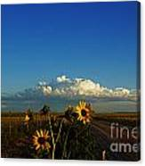 Sunflower Views Canvas Print