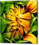 Sunflower Volunteer Canvas Print