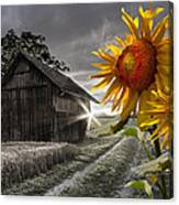 Sunflower Watch Canvas Print