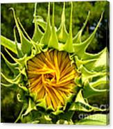 Sunflower Whirl Canvas Print