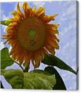 Sunflower With Busy Bees Canvas Print