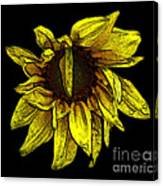 Sunflower With Contours Effect Canvas Print
