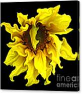 Sunflower With Curlicues Effect Canvas Print