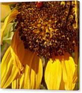 Sunflower With Ladybug Canvas Print