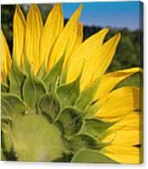 Sunflower1253 Canvas Print