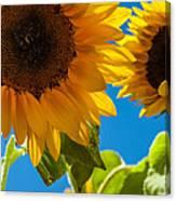 Sunflowers 2 Canvas Print