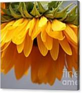 Sunflowers 6 Canvas Print