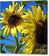 Sunflowers Abound Canvas Print