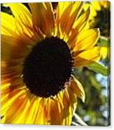 Sunflowers Alive And Free Canvas Print