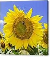 Sunflowers And Blue Sky Canvas Print