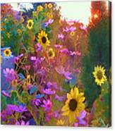 Sunflowers And Cosmos Canvas Print