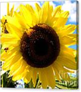 Sunflowers Feeding The Hive Canvas Print