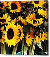 Sunflowers In Blue Bowls Canvas Print