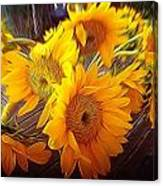 Sunflowers In December Canvas Print