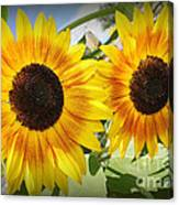 Sunflowers In Full Bloom Canvas Print