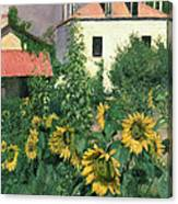 Sunflowers In The Garden At Petit Gennevilliers  Canvas Print