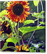 Sunflowers In The Park Canvas Print