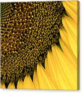 Sunflowers Of Summer Canvas Print