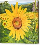 Sunflowers - Red Barn - Pennsylvania Canvas Print
