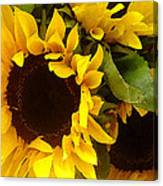 Sunflowers Wide Canvas Print