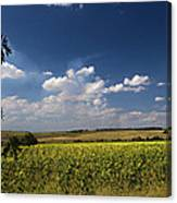 Sunflowers With Cloudy Blue Sky Canvas Print