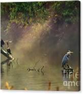 Sunglow Heron Canvas Print