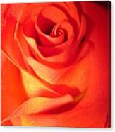 Sunkissed Orange Rose 10 Canvas Print