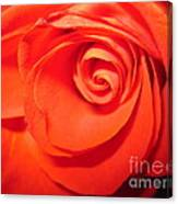 Sunkissed Orange Rose 9 Canvas Print